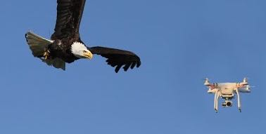 See how Dutch Police have trained eagles to take down illegal drones