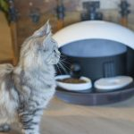 Catspad is a smart pet assistant to monitor your cat's health