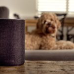 Audible reveals audiobook collection that can keep your dog calm