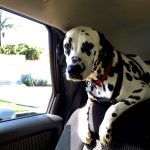 Tesla's next software update to include Dog and Sentry Modes