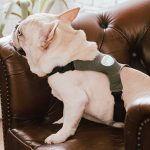 Meet Inupathy – the device that can tell you how your dog is feeling