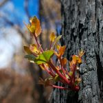 Optus to support bushfire-affected regional areas with Green Shoots grants program