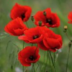 How you can honour our war heroes on Anzac Day using Amazon Alexa