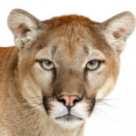 Apple unleashes Mountain Lion – the latest Mac operating system